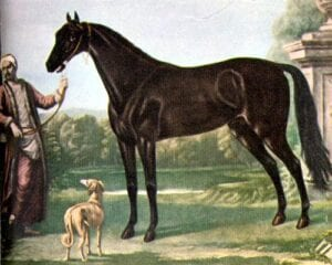 Image of the Byerley Turk painting by John Wootton